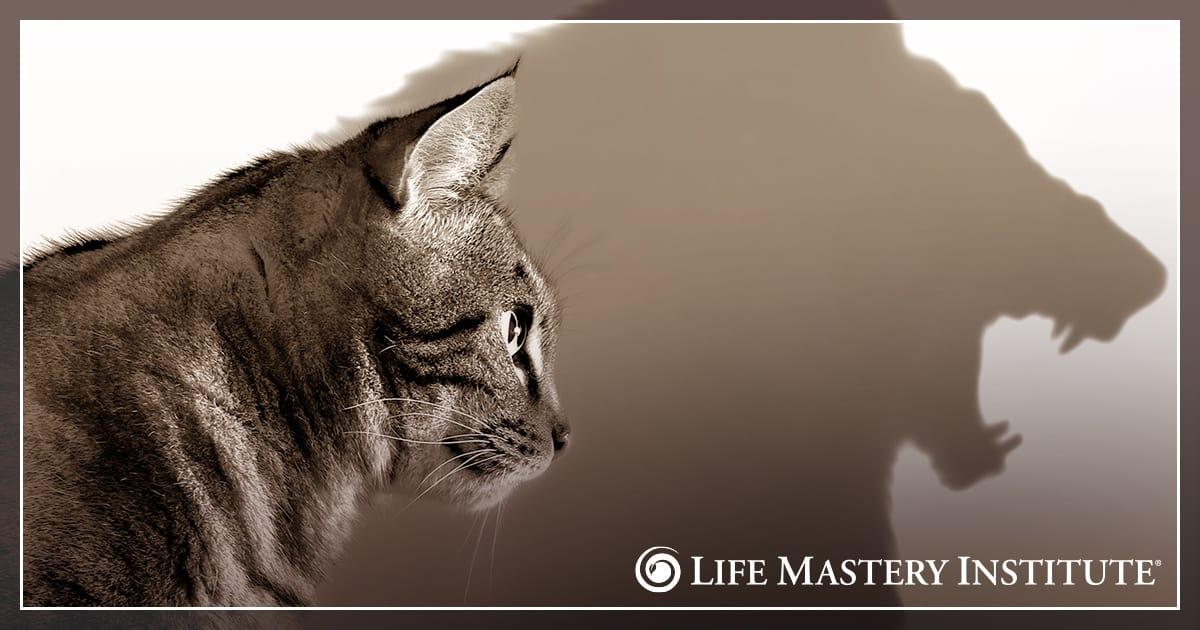 supernatural aid lion cat