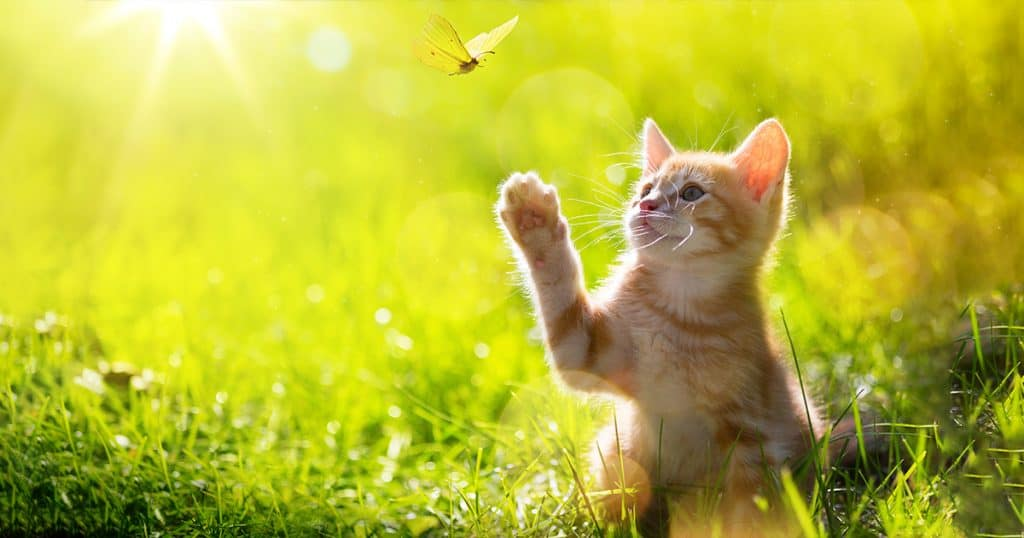 important-life-lessons-kitty-guru